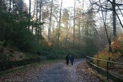 Herbstwaldlauf 2008